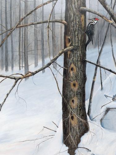 Winter Feast, Piliated Woodpecker