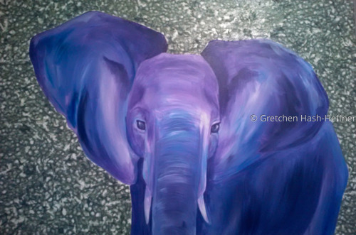 Big Ears Western Elephant
