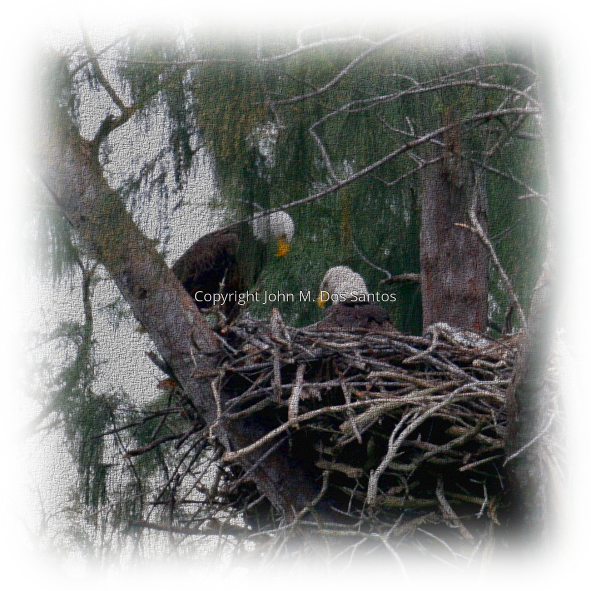 Eagles of Pembroke Pines #1 (large view)