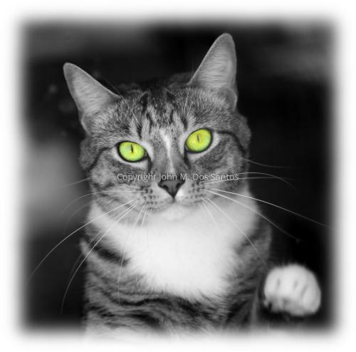 Catbitch #3
