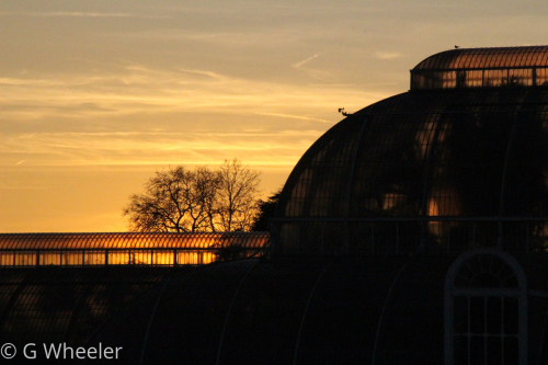 Golden Palm House by G Wheeler Photography