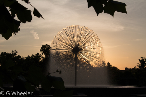Perpetual Dandelion by G Wheeler Photography