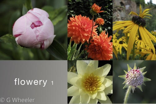 Flowery 1 by G Wheeler Photography