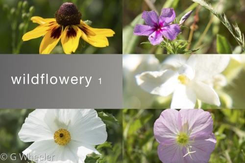 Wildflowery 1