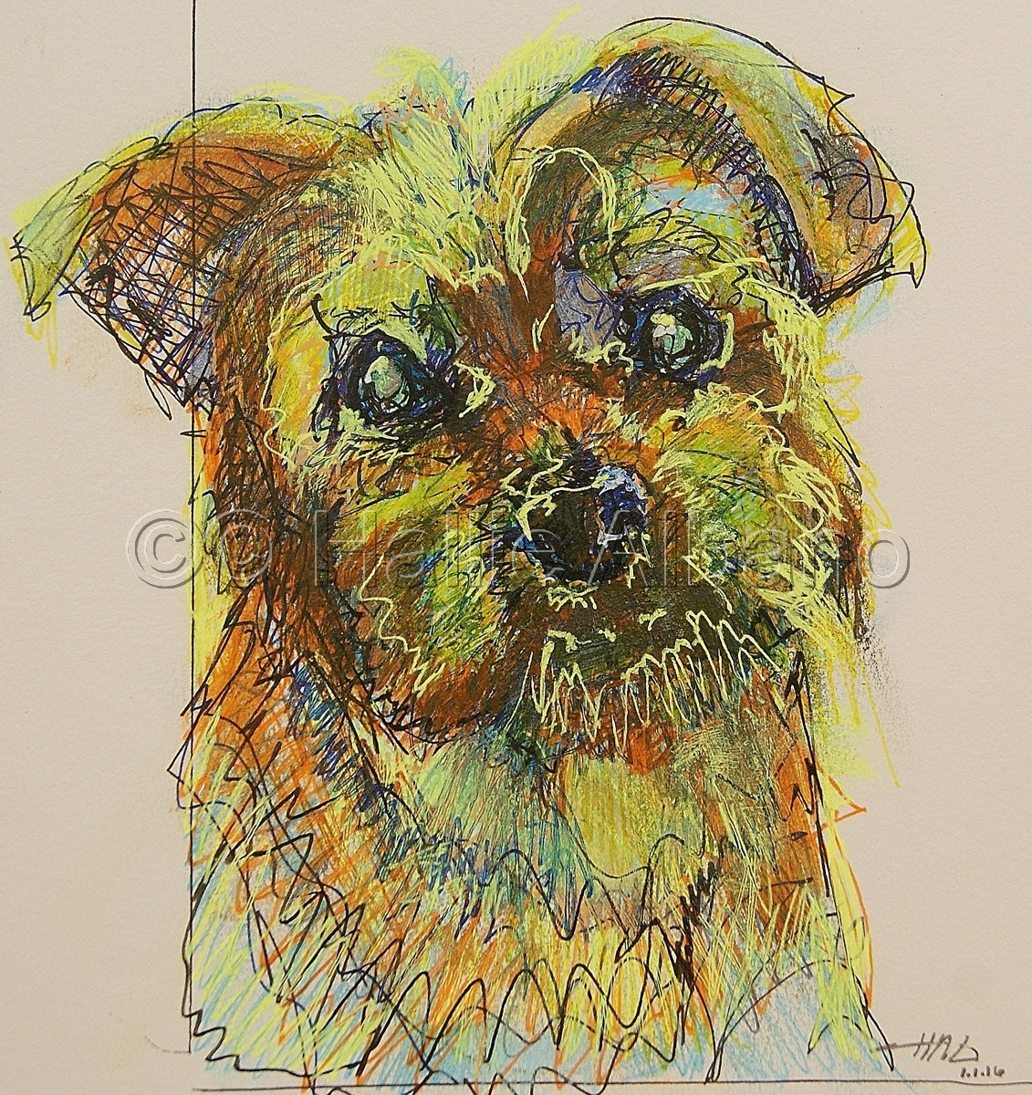 Dolce the Yorkie-Apso (large view)