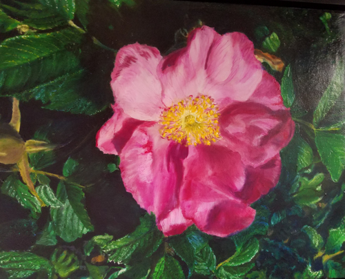 Mackinaw Rose by Hannah Apps