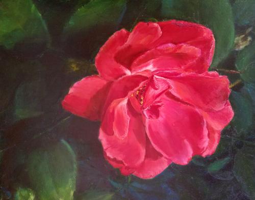 Michigan Red Rose