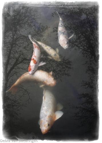"""""""Freefall"""" by Van Swearingen Photography"""