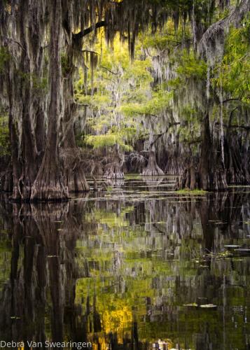 Secrets of Caddo Lake by Van Swearingen Photography