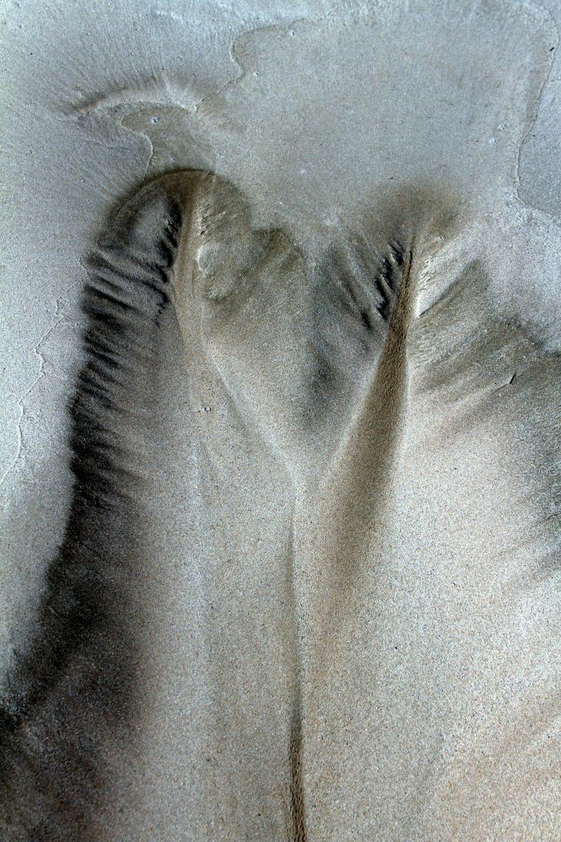 Softness (large view)