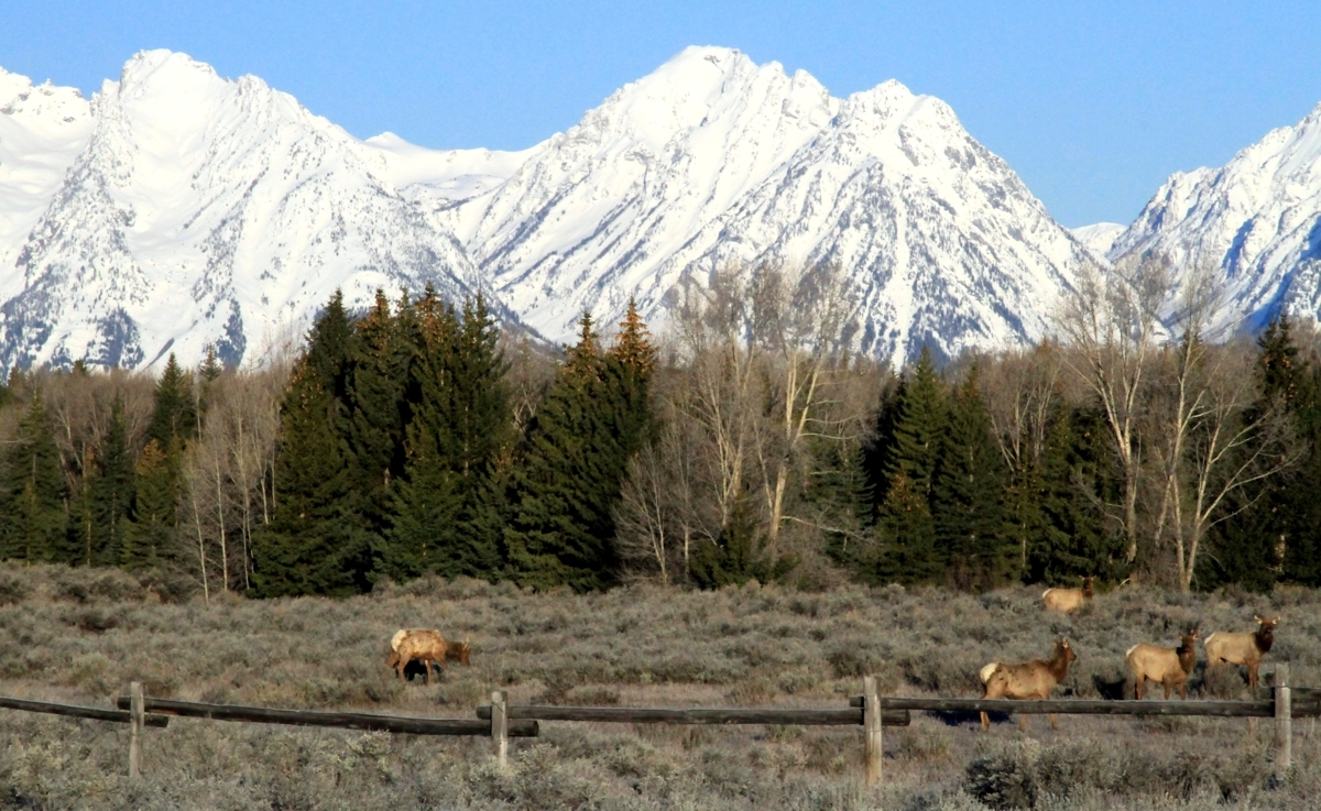 Teton mountains and wildlife (large view)