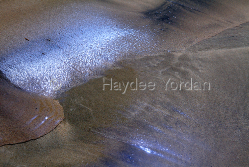 Bioluminescent Sands (large view)