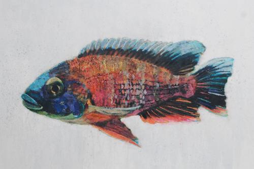 Fish Series 6