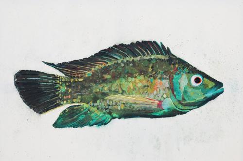 Fish Series 7