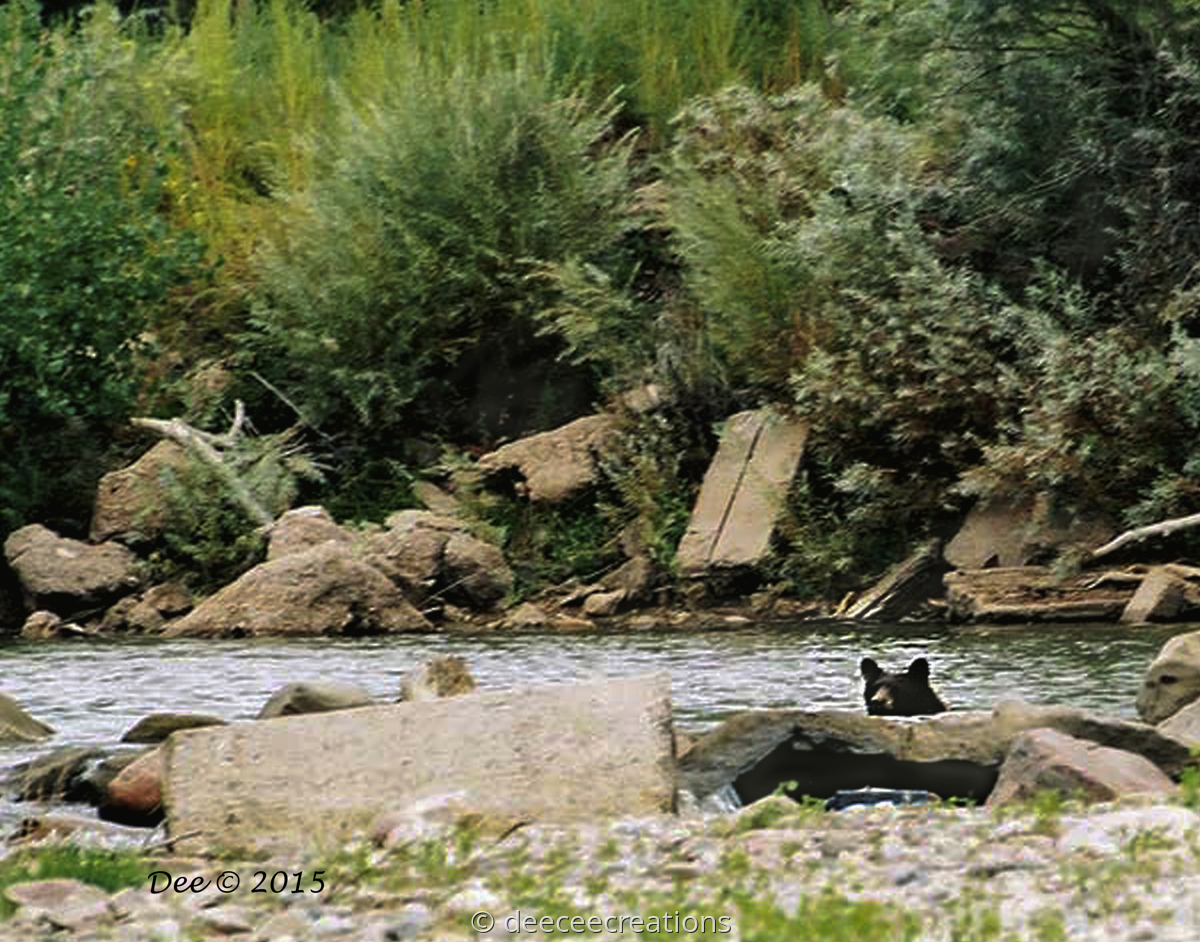 River Bear (large view)