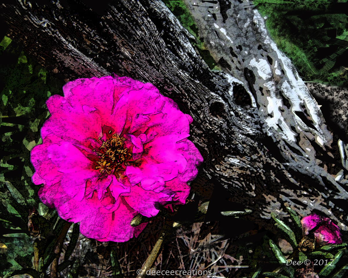 Moss Rose (large view)