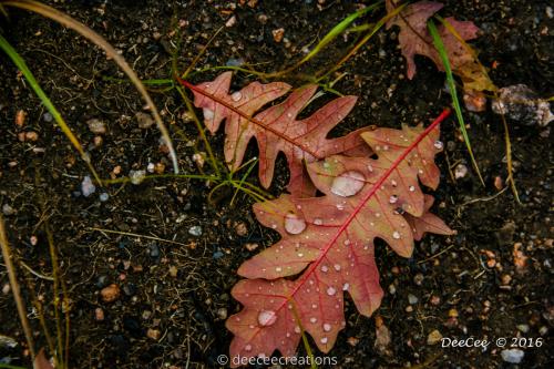 Oaken Red by DeeCeeCreations