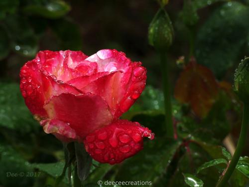 Rose n' Dew by DeeCeeCreations
