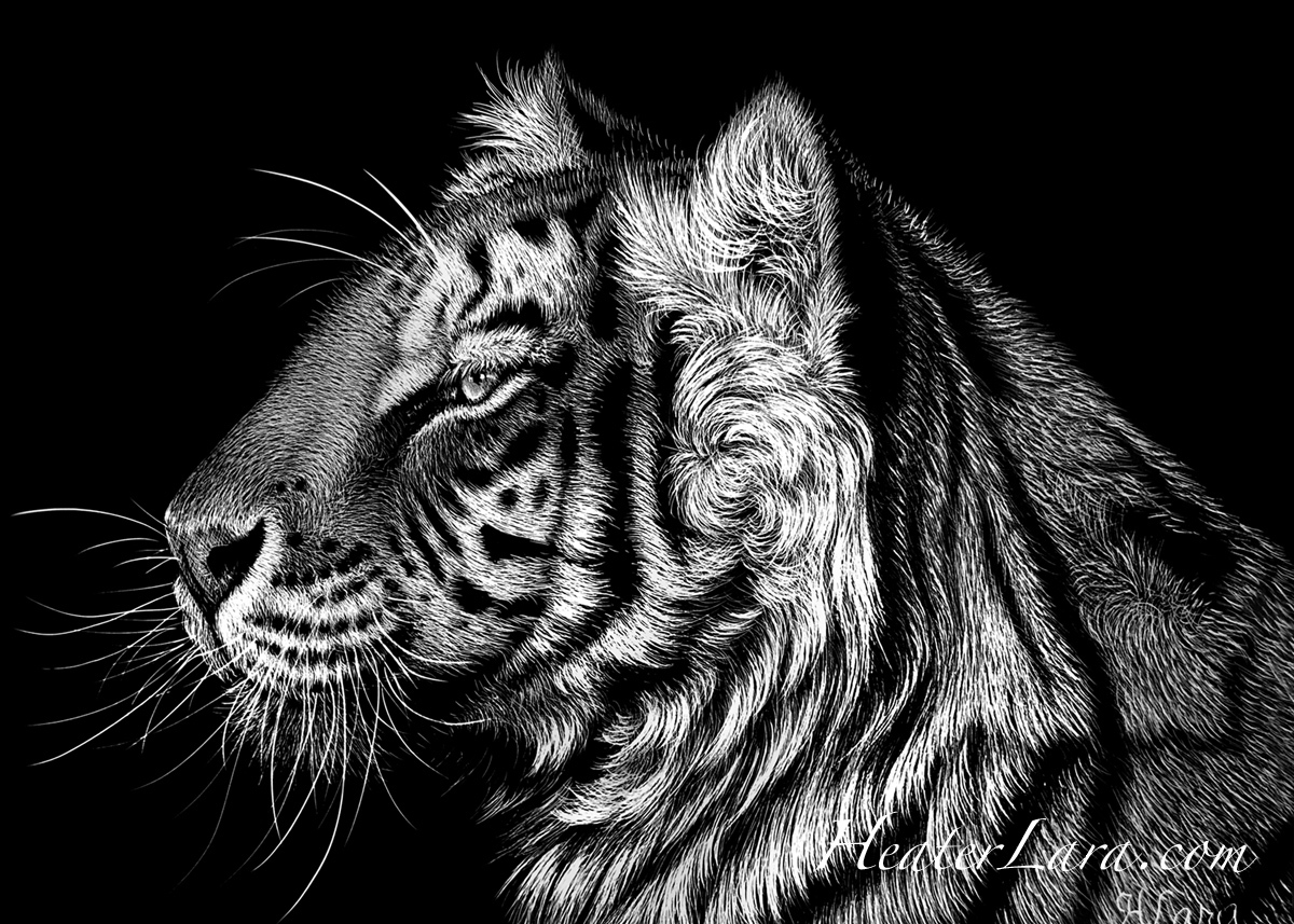5x7 Tiger (large view)