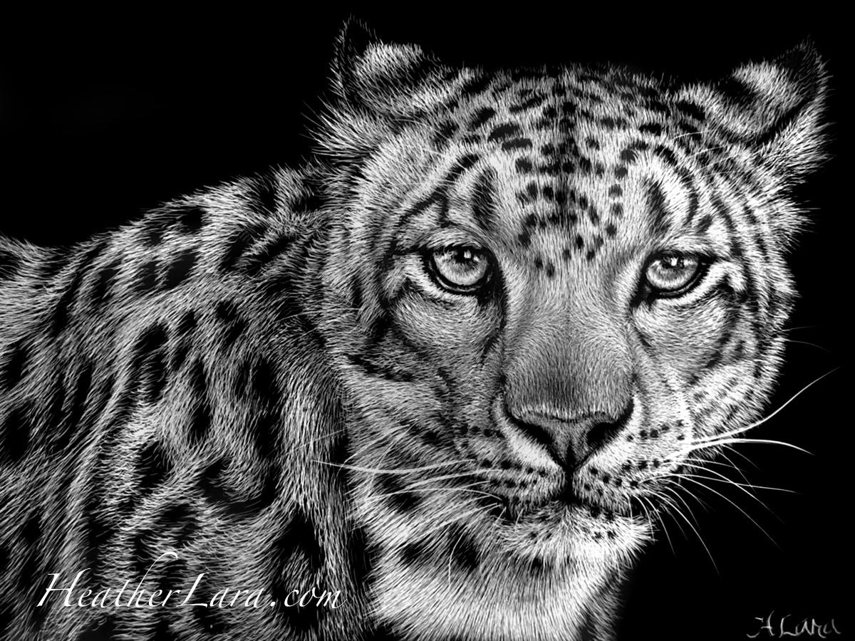 5x7 Snow Leopard (large view)