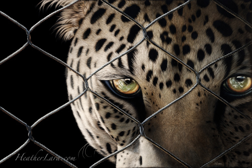 Captivity 2 - Java