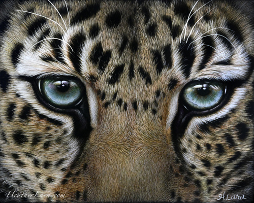 Amur Leopard Eye Study