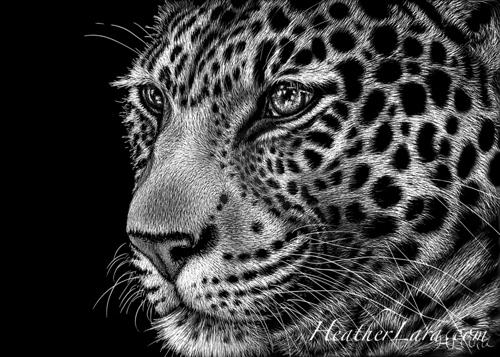 5x7 Leopard (large view)