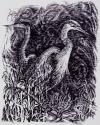 Great Blue Herons by Helen Grainger Wilson (thumbnail)