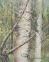 Basque Arborglyphs, Sun Valley Idaho, © Helen Grainger Wilson. All rights reserved. (thumbnail)