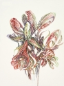 Amaryllis Buds, © Helen Grainger Wilson. All rights reserved. (thumbnail)