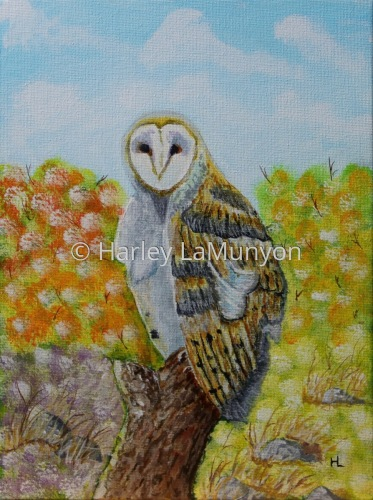 Mr Owl #17