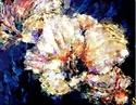 Hibiscus (thumbnail)