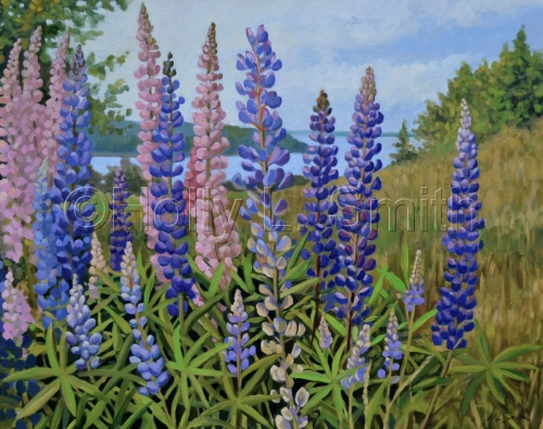 Lupine Fields On Eagle Island