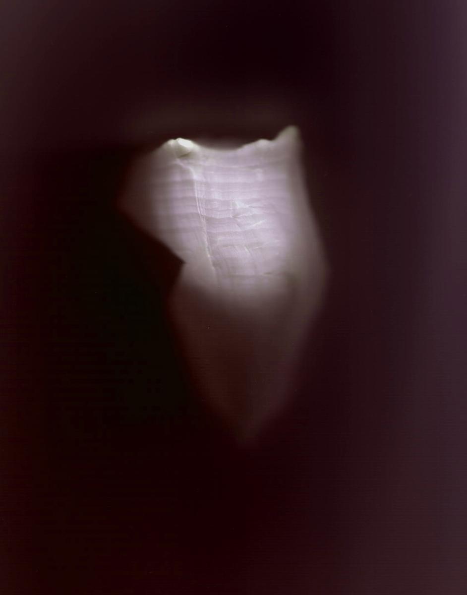 Tigertail VII (large view)