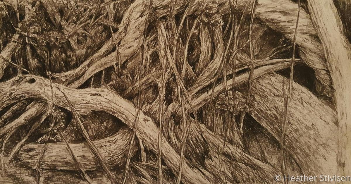 Tangled Roots (large view)