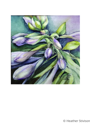 Hosta Greeting Card Set by Heather Stivison