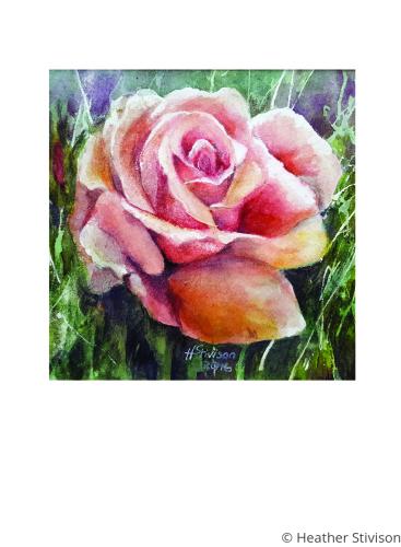 Rose Greeting Card Set