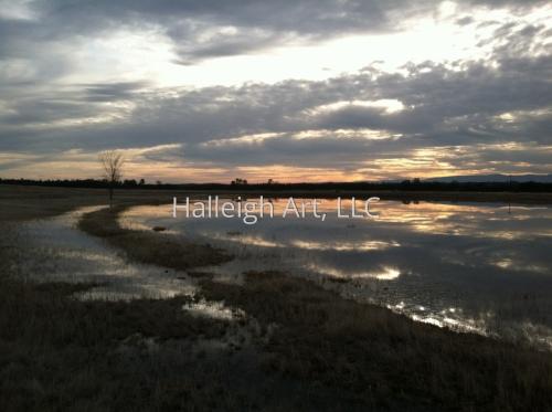 Paynes Creek Nocturne