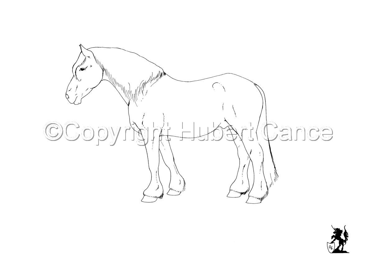 Horse Portrait #2 Ink (large view)
