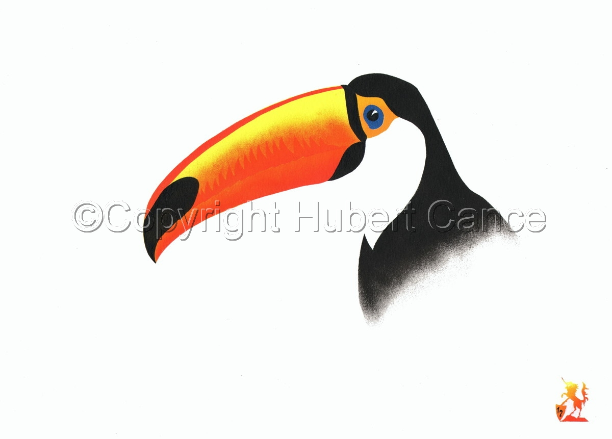 """Toco Toucan"" (large view)"