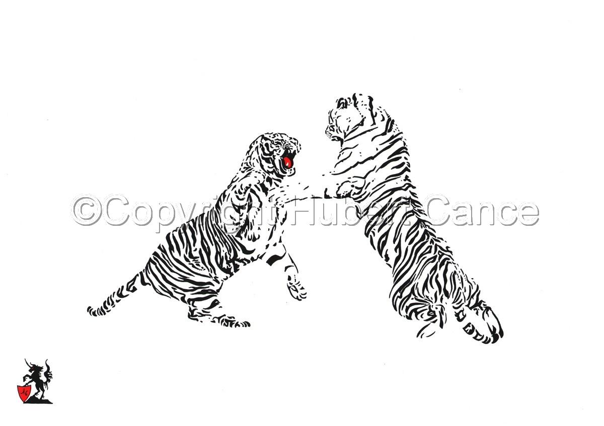 Black, White and... Red: Fighting Tigers (large view)