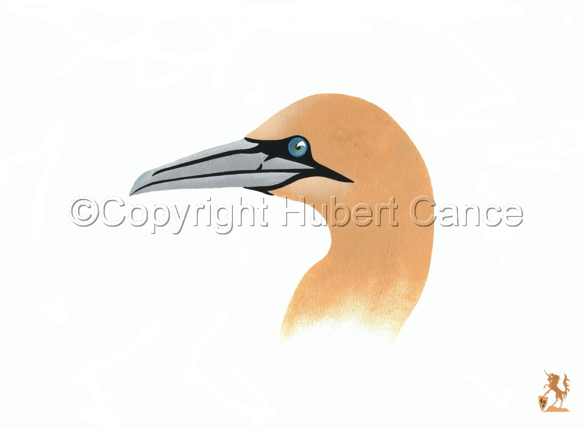 """Northern Gannet"" (large view)"