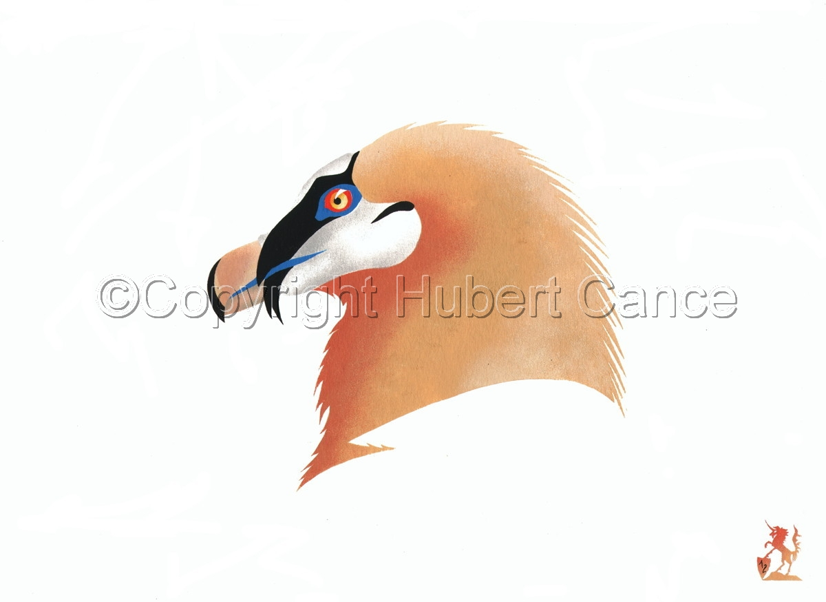 """""""Bearded Vulture"""" (large view)"""