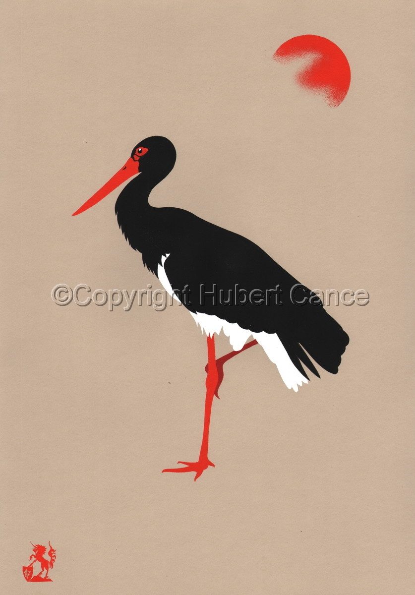 Black Stork (large view)