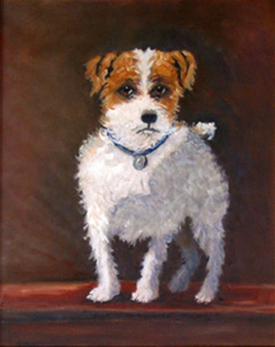 Rough Coated Jack Russell Terrier, large (large view)