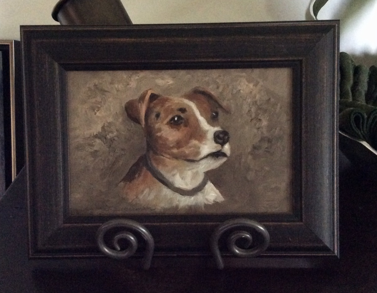Jack Russel Terrier   (large view)