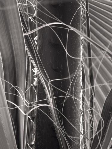 Palm by Heidi Wrage