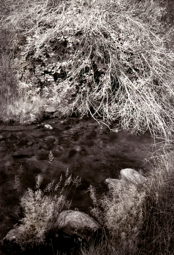 Stream and Old Bush
