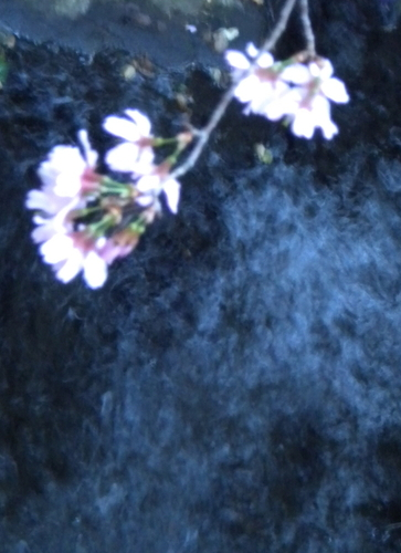 Cherry Blossoms Over Stream