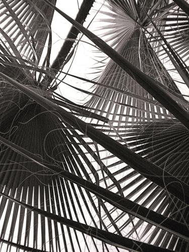 Palm at Variel St.